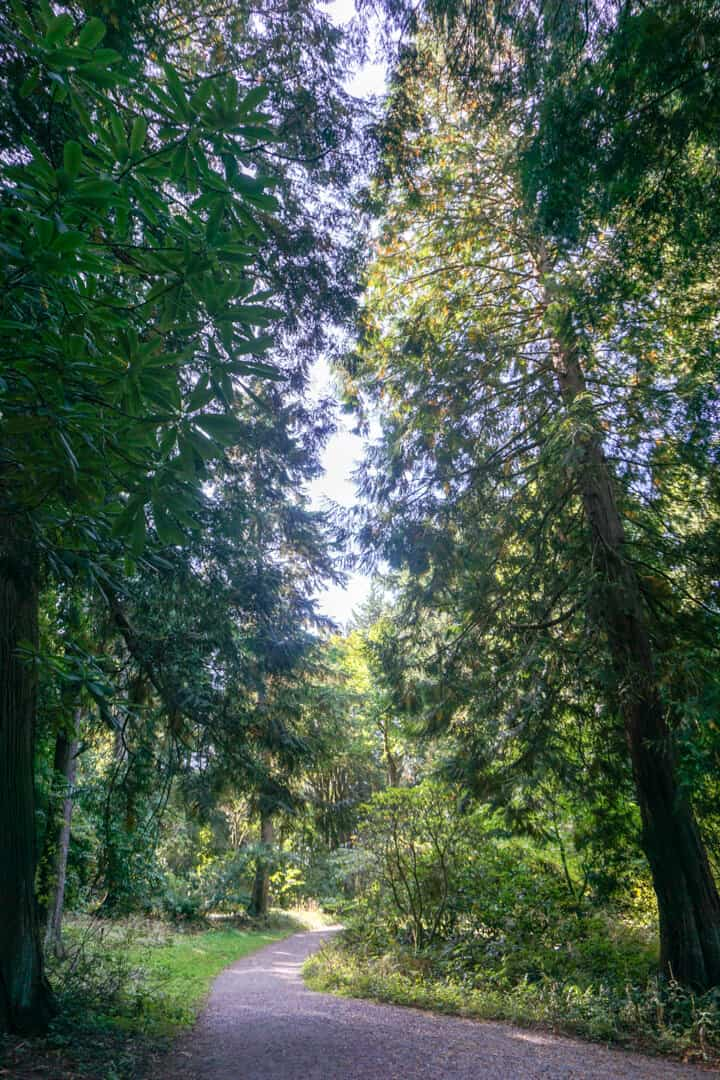 Shady, tree-lined path in the Washington Park Arboretum in Seattle