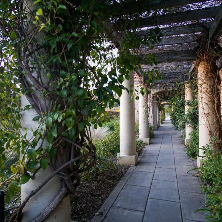 Plants twisting around the columns of a walkway at the Huntington Library in San Marino, California.